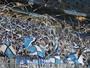 Arena projeta público de 50 mil em decisão do Grêmio contra o Cruzeiro