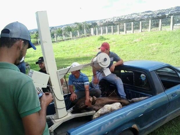 Radiografia em cavalo foi feita com equipamento de hospital, diz promotoria (Foto: Divulgação)