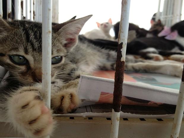 Gato foi levado para feira de adoção (Foto: Ivanete Damasceno/G1)