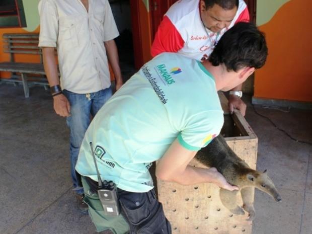 Espécie recebeu cuidados médicos na reserva Sauim Castanheiras (Foto: Carlos Eduardo Matos/G1 AM)