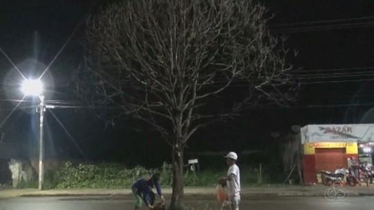 Mais de 30 árvores são derrubadas em avenida de Iranduba no AM