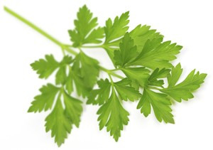 Parsley on white (Foto: Getty Images/iStockphoto)