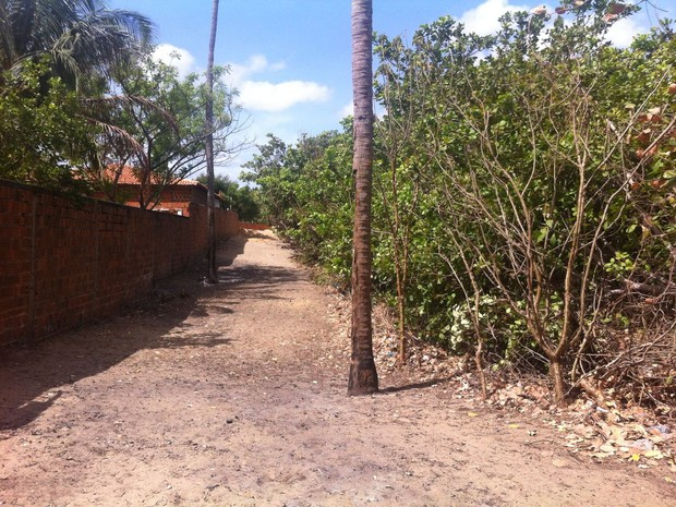 Parte do Cajueiro Rei foi cortado no Piauí (Foto: Marcos Cazuza/Arquivo pessoal)