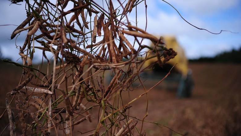 feijao_agricultura_colheita (Foto: Ernesto de Souza/Ed. Globo)