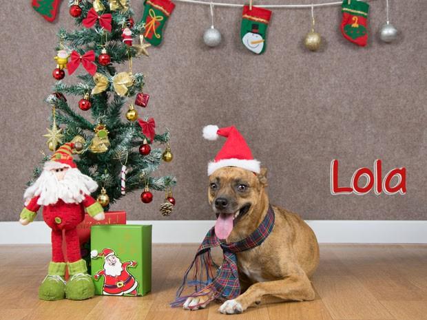 Lola é um dos cães do projeto (Foto: Annie Luna/Clickão)