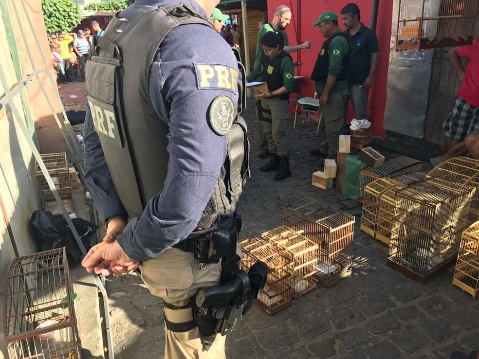 Operação foi realizada em conjunto pela PRF e Ibama (Foto: Divulgação/PRF)