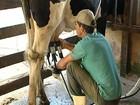 Cabeça da vaca leiteira de RO custa R$ 2.905,56 , em média, diz Emater