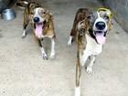 Prefeitura em MT recorre de liminar que manda recolher e tratar animais
