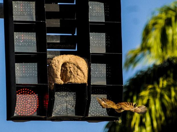 Pássaro é visto saindo de sua 'casa' na capital catarinense. (Foto: Eduardo Valente/Futura Press/Estadão Conteúdo)