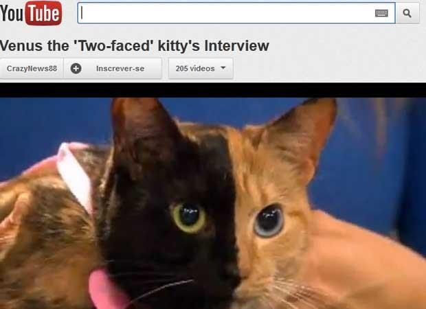 A gata Vênus durante entrevista com sua dona a emissora de TV (Foto: Reprodução)