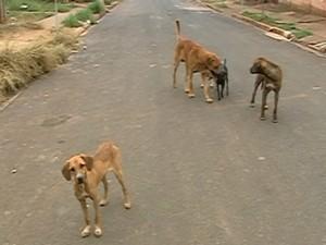 AXA Ataque Cães Araxá (Foto: TV Integração/Reprodução)