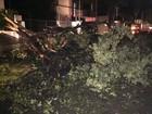 Árvore não resiste à chuva, cai e mata ciclista na Avenida Rosa e Silva