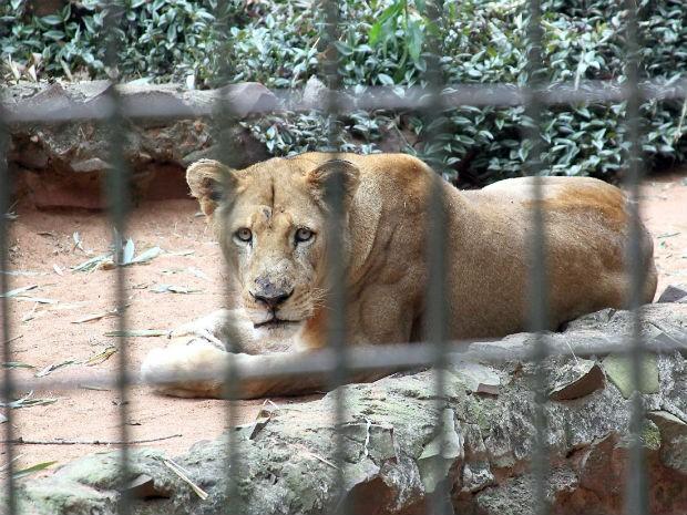 Zoológico é aberto para visitação de terça-feira a domingo (Foto: Prefeitura Municipal de Cascavel/Divulgação)