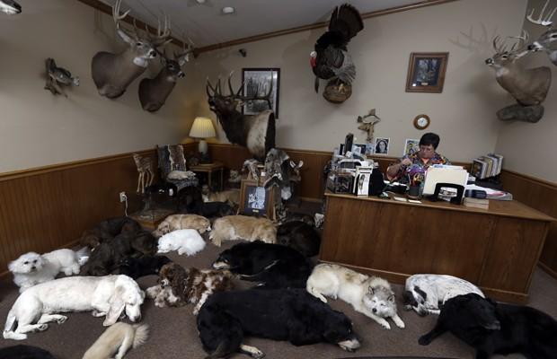 Recepcionista em escritório de Anthony Eddy com dezenas de cães e outros animais preservados através do processo de 'freeze drying' (Foto: Jeff Roberson/AP)