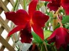Mostra de orquídeas reúne expositores de quatro estados no RN