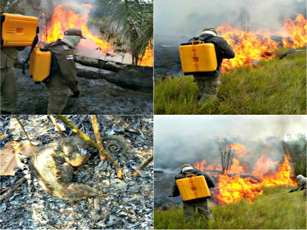 Equipe combate focos de queimadas em áreas às margens da rodovia AM-352 (Foto: Divulgação/Corpo de Bombeiros)