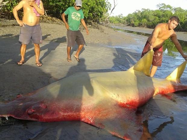 animal foi levado para a praia de Mangue Seco, na cidade de Raposa (Foto: Domingos Costa / Divulgação)
