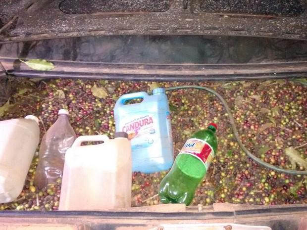 No porta-malas do carro, motorista carregava grãos de café em Machado, MG; origem ainda é desconhecida (Foto: Polícia Militar)