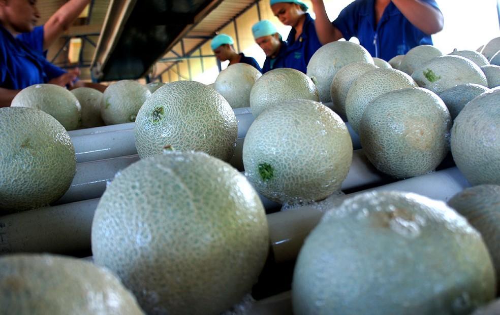 A comercialização destes alimentos será regulamentada para prevenir infestação de praga (Foto: Anderson Barbosa/G1)