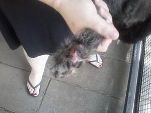 O cachorro perdeu uma parte do dedo da pata traseira (Foto: Solange Sol Gonçalves / arquivo pessoal)