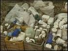 MPT encontra cercado para bebê em fazenda durante fiscalização em Tupã