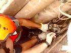 Cão é resgatado após ficar preso em poste (Divulgação/Corpo de Bombeiros)