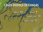 Novos casos de doença de chagas preocupam autoridades no Pará