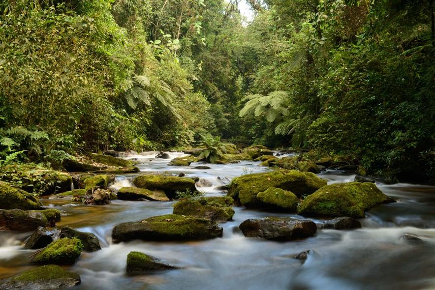Reserva florestal da Mata Atlântica Legado das Águas, da Votorantim, no Vale do Ribeira, em São Paulo