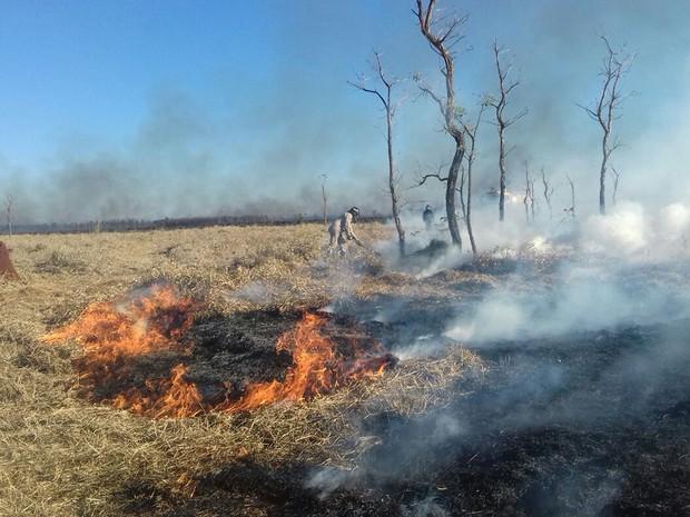 Incêndio atinge vegetação de aeroporto em Dourados, MS (Foto: Diogo Nolasco/TV Morena)