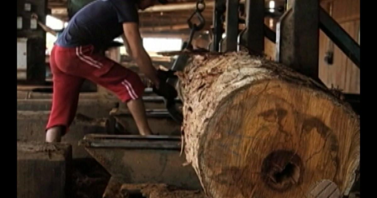 Resultado de imagem para Madeireiros têm prazo pra regularizar encargos trabalhistas no Pará