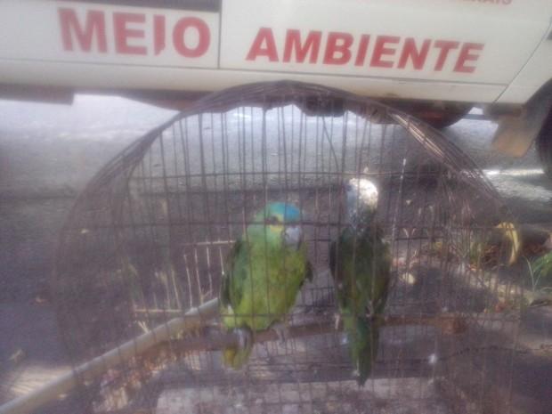 Papagaio foi encontrado em uma gaiola e a maritaca solta (Foto: Polícia Militar/Divulgação)