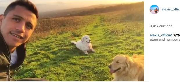 Alexis com seus cães