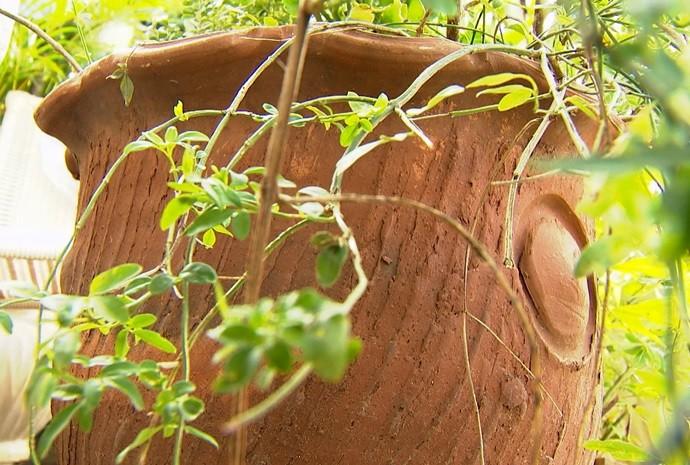 Tem gente que cuida das plantinhas como se fossem filhos (Foto: Reprodução / TV TEM)