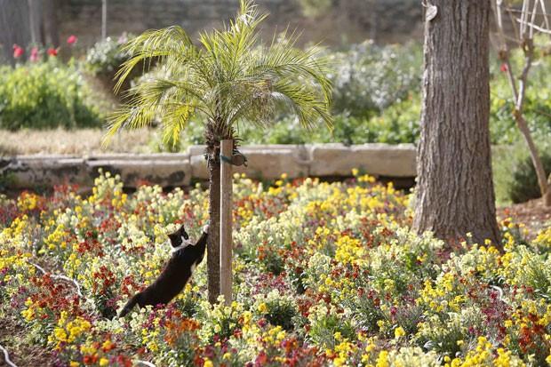Um gato parecia posar para foto ao ser clicado na quarta-feira (20) no jardim do Palácio San Anton, residência oficial do presidente de Malta, George Abela, na capital Valletta (Foto: Darrin Zammit Lupi/Reuters)
