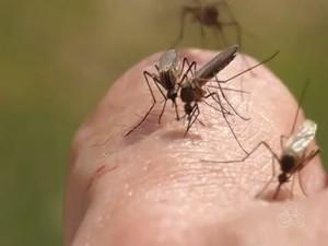 Em Boa Vista 1.500 casos são suspeitos de zika (Foto: Reprodução/Rede Amazônica em Roraima)