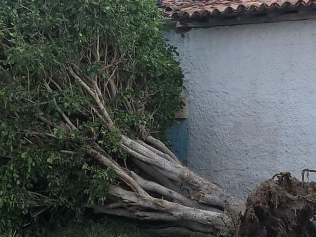 Ventos fortes derrubaram árvores em Tanquinho, na Bahia (Foto: Diego Macedo/TV Subaé)