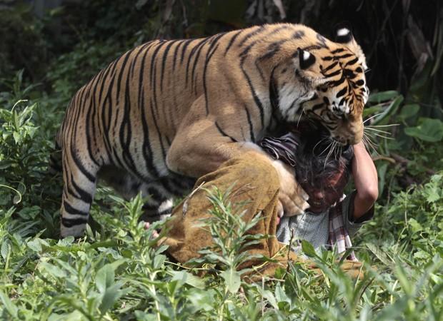 Um tigre de quatro anos é mantido como animal de estimação em uma escola islâmica de Malang, na Indonésia, informaram agências de notícias nesta sexta-feira (22). O animal é chamado de 'Mulan Jamila' e é mantido com uma permissão do governo do país (Foto: Sigit Pamungkas/Reuters)