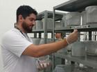 Fábrica para produzir 60 milhões de 'Aedes do Bem' é inaugurada em SP
