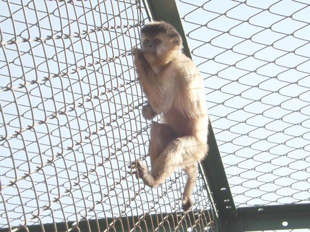 Fotografia tirada no dia 5 de agosto mostra o animal subindo no alambrado do viveiro (Foto: Alan Schneider / G1)