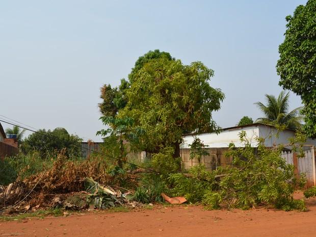 Maioria das ocorrências do Corpo de Bombeiros foram de árvores caídas após o temporal (Foto: Hosana Morais/G1)