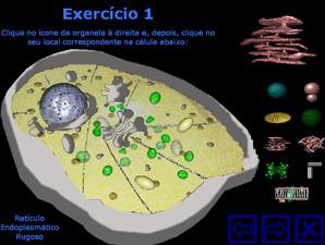 Jogo biologia celular