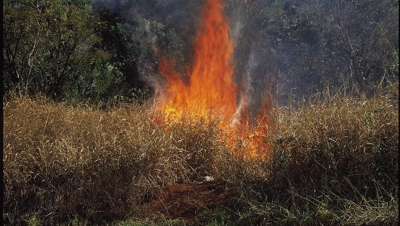 queimada-fogo-canavial (Foto: Amilton Vieira/Editora Globo)
