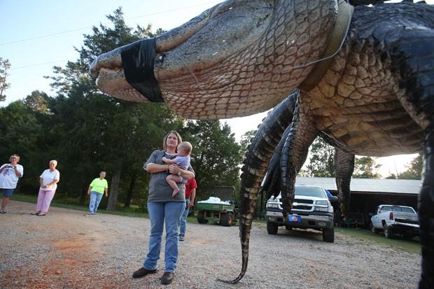 Enorme jacaré virou atração no Alabama (Foto: Sharon Steinmann/Al.com/AP)