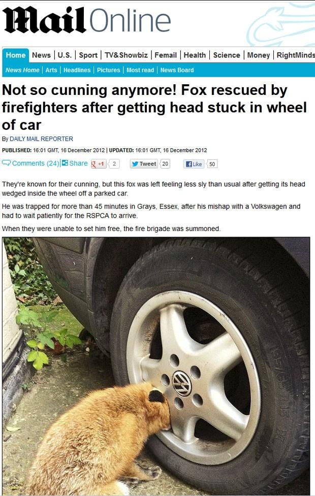 Raposa foi encontrada com a cabeça entalada em roda de carro (Foto: Reprodução/Daily Mail)