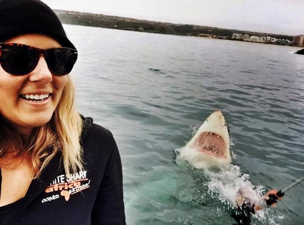 Tubarão branco tinha sido atraído com uma isca (Foto: Reprodução/Facebook/Amanda Brewer)