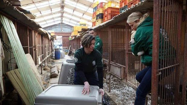 Segundo ativistas, muitos vendedores de cães estão dispostos a mudar de ramo, se tiverem apoio financeiro  (Foto: Change For Animals Foundation)