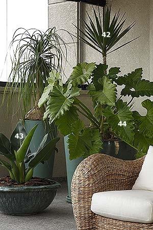 Plantas as top 50 casa e jardim jardim for Plantas para dentro de casa sombra