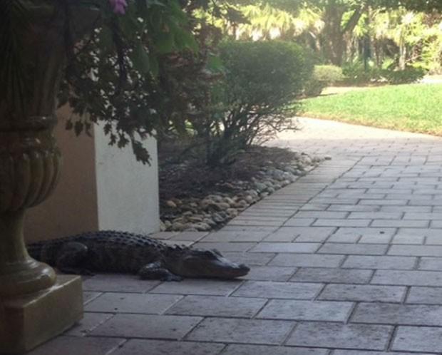 Lloyd Tomer se assustou ao se deparar com aligátor (Foto: Reprodução)