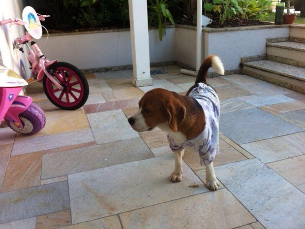 Empresário enviou foto de cachorro que teria sido adotado por sua família em Valinhos (SP). (Foto: Arquivo Pessoal)