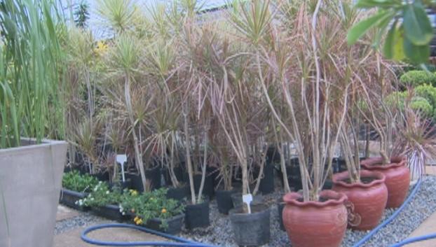 As plantas que podem ser cultivadas em vasos são as mais procuradas (Foto: Bom Dia Amazônia)